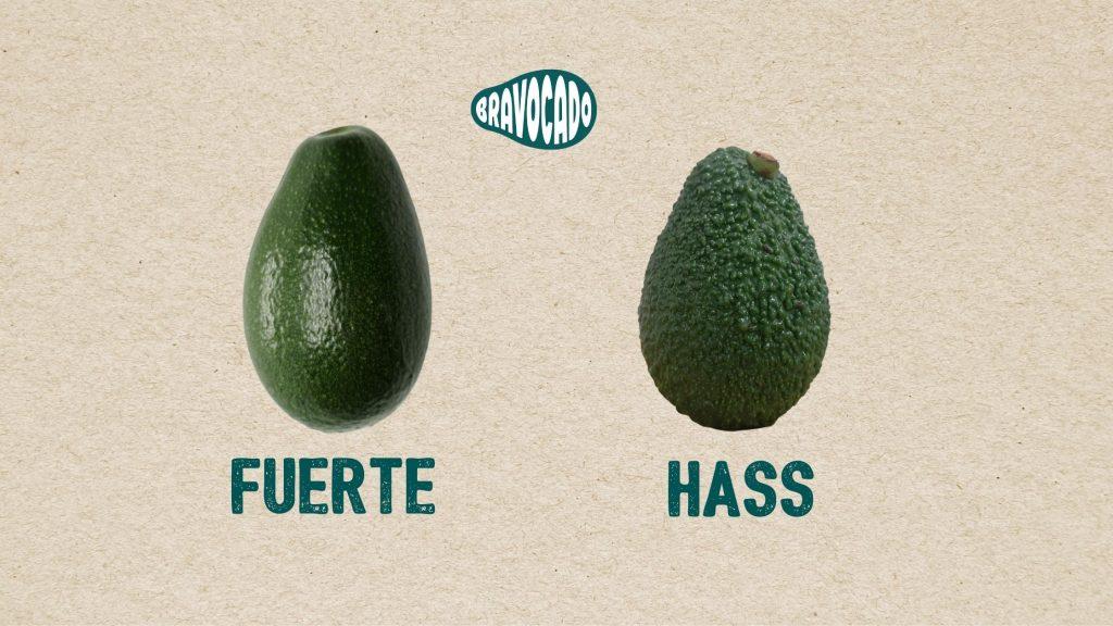 Avocado fuerte e hass, come capire quando l'avocado è marturo